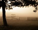 Misty fog at dawn