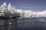 Rowers on Carnegie Lake