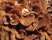 Fungi copy.jpg
