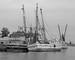 Sponge Fishing Fleet