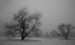 A Cold Mist