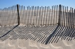 Saving the Dunes