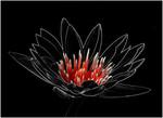 Crimson Water Lily