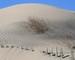 Sand Dune 30